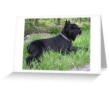 Well-trained Schnauzer Giant Greeting Card