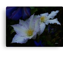 Clematis Gladys Picard Canvas Print