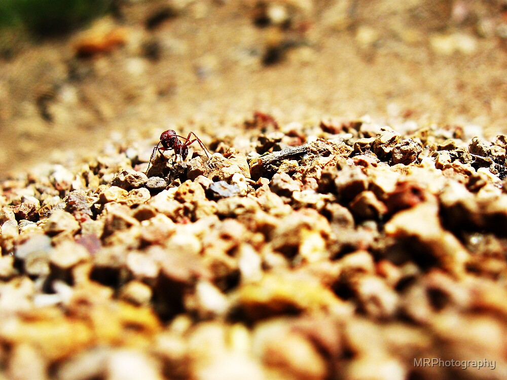 Ant Hill by MRPhotography