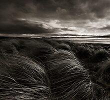 Longing, Dunnet Beach, Caithness, Scotland by Martina Cross