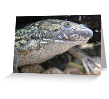 Unbelievable African Clawed Frog Greeting Card