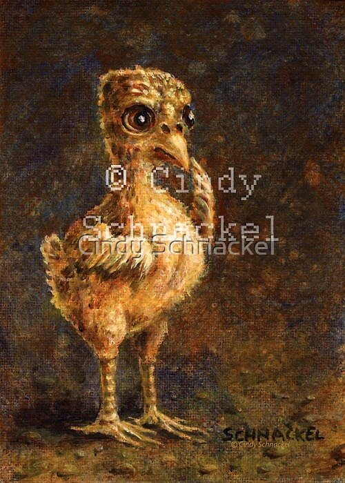 Young Turkey by Cindy Schnackel