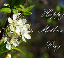 Mothers Day Spring White Flowers by Robin Clifton