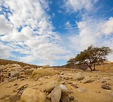 Enduring Acacia tree survives in the Desert by PhotoStock-Isra