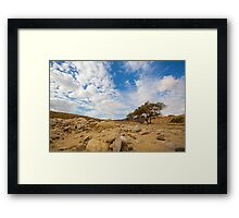 Enduring Acacia tree survives in the Desert Framed Print