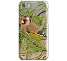 European Goldfinch perched on branch iPhone Case/Skin