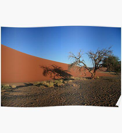 Dune 45,Dead Tree in morning sunshine Poster