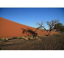 Dune 45,Dead Tree in morning sunshine Photographic Print