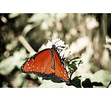 Dreaming of Butterflies Photographic Print
