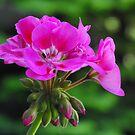 So Pink! by Tracy Wazny