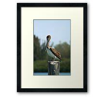 Pelican Watching Framed Print