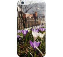 Spring in the old City - crocus Spring meadow iPhone Case/Skin