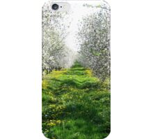 Apple Blossoms In Adams County iPhone Case/Skin