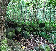 Maui Jungle Path by Erin-Lloyd