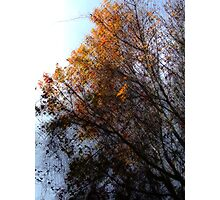 Autumn 2 Photographic Print