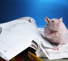 My rat ate my homework by strickland