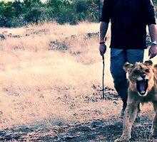 Scott and the Lion - Zimbabwe by MacLeod