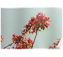 Pink blossom tree. Retro version Poster