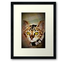 Fractalius Kitty Framed Print