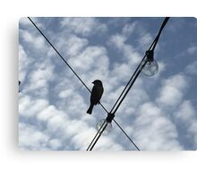 Bird on a Wire Canvas Print
