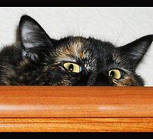 Lucy Looking Kitty by Nilla Haluska