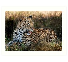 Phinda Leopard portrait Art Print