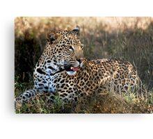 Phinda Leopard portrait Metal Print