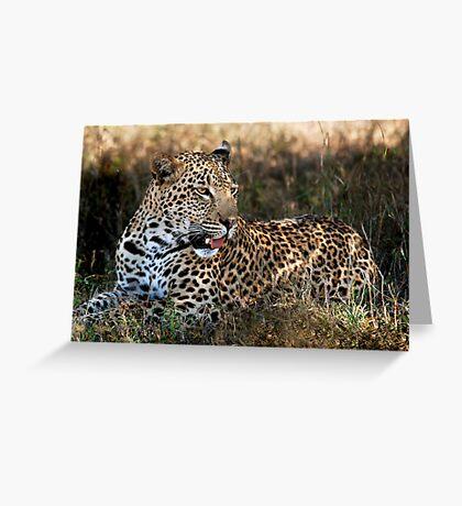 Phinda Leopard portrait Greeting Card
