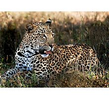 Phinda Leopard portrait Photographic Print