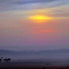 Foggy Morning by Neophytos