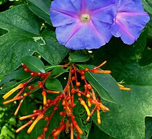 MEXICAN FIRE BUSH & BLUE FLOWER by artist4peace