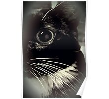 Tux the Cat #1 Poster