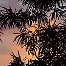 Hawaiian Sillouette by Ellen Cotton