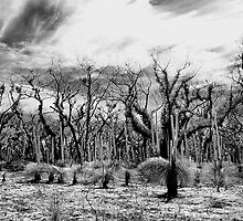 After the fires. by trevorb