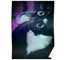 Tux the Cat #3 Poster