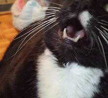 Tux the Cat #4 by Matt Burke