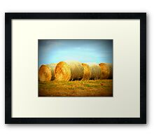 Golden Bales Framed Print