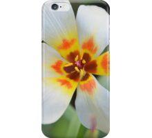 A special tulip iPhone Case/Skin