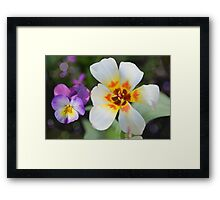 A special tulip Framed Print