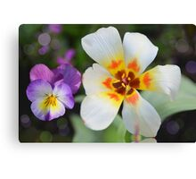 A special tulip Canvas Print