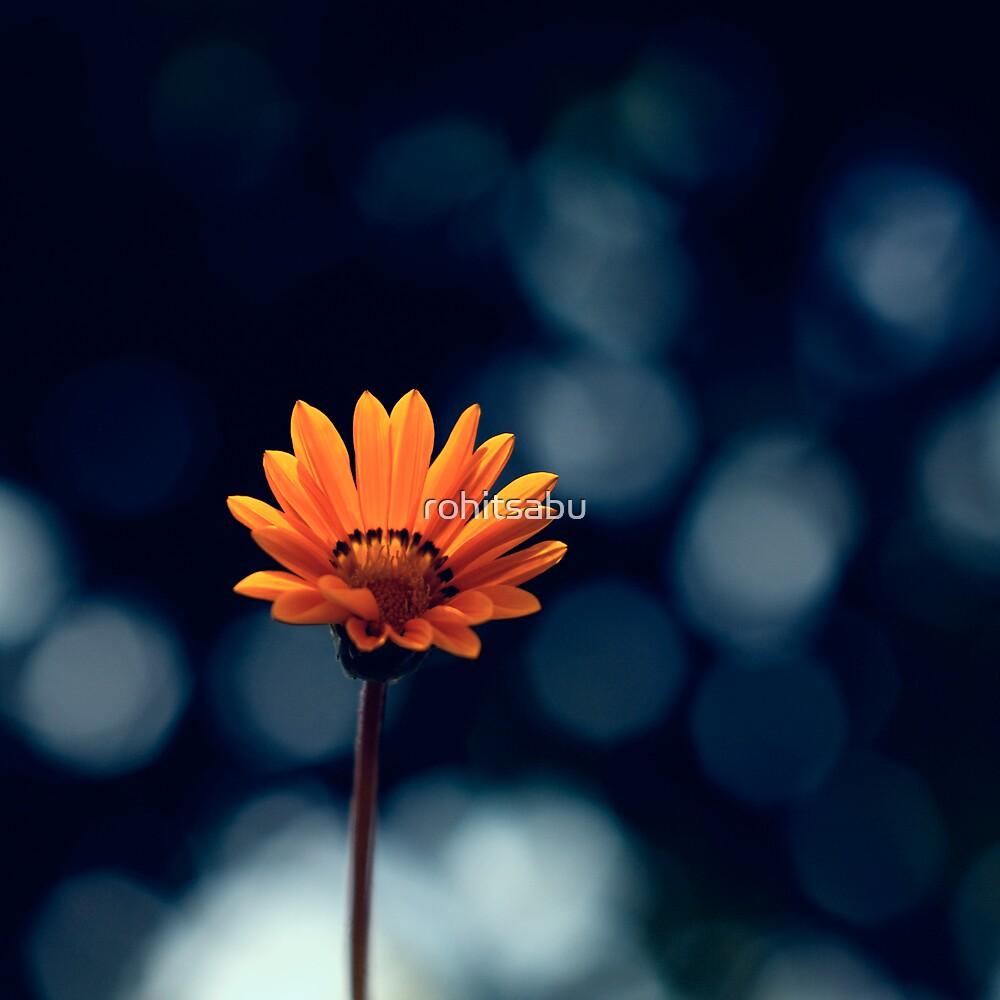Flower Power by rohitsabu