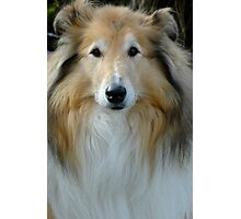 Lassie Photographic Print