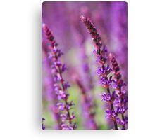 Summer purple Canvas Print