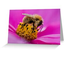 Cosmea Bee Greeting Card