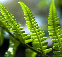 Ferns by Victoria Kidgell