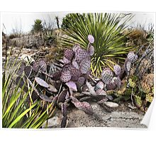 Purple Prickly Pear Poster