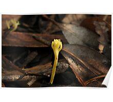 Fungi Season 30 Poster