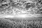 Wheatfield  by James Coard