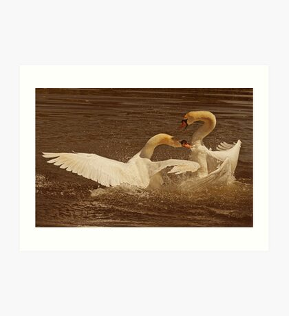 Swan Battle Art Print