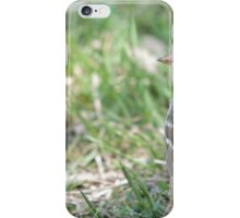 White-crowned Sparrow 2 iPhone Case/Skin